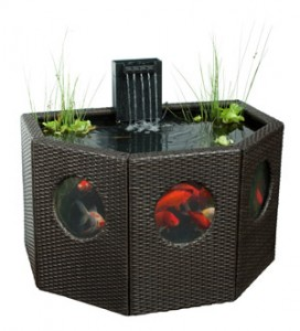 Featured koi pond