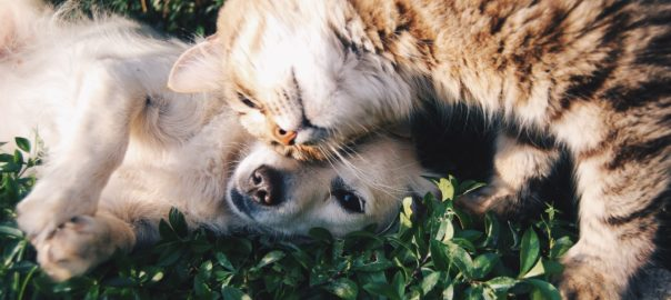 family pet cats and dogs